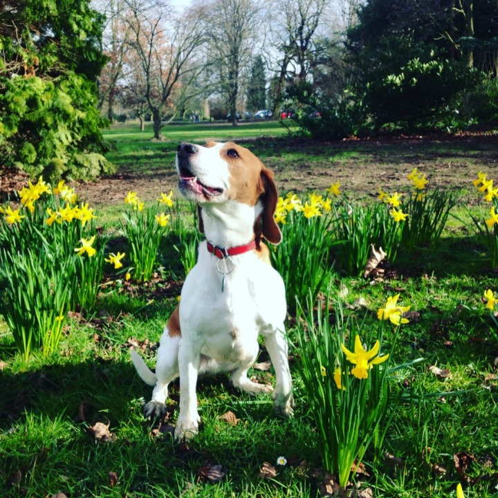 Bonnie Daffodils
