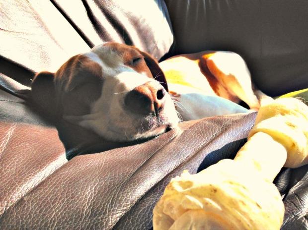 Sleepy Bonnie