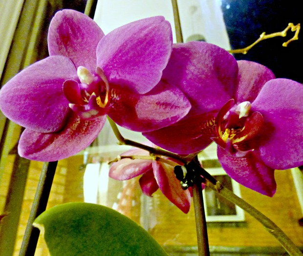 orchid-2