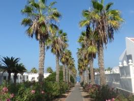 Tenerife 23