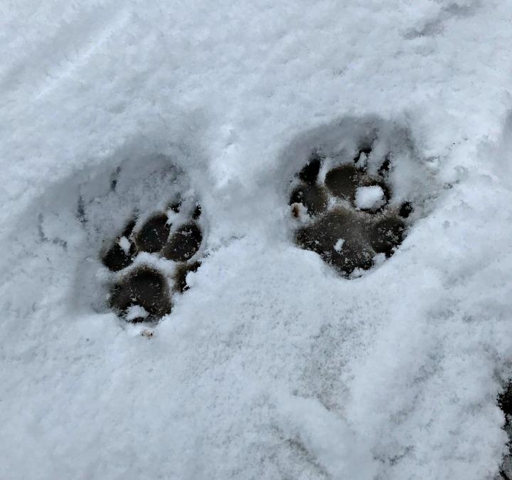 Bonnie Snow 6.jpg