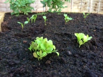 Garden 1 (1)