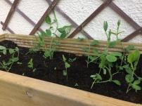 Garden 1 (3)