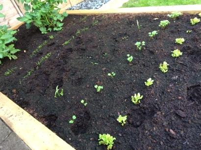 Garden 1 (5)