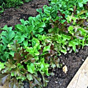 Garden Grown 4