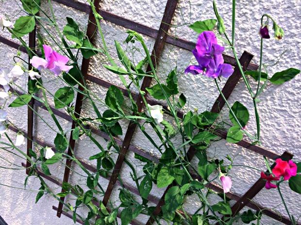 Garden Grown 6